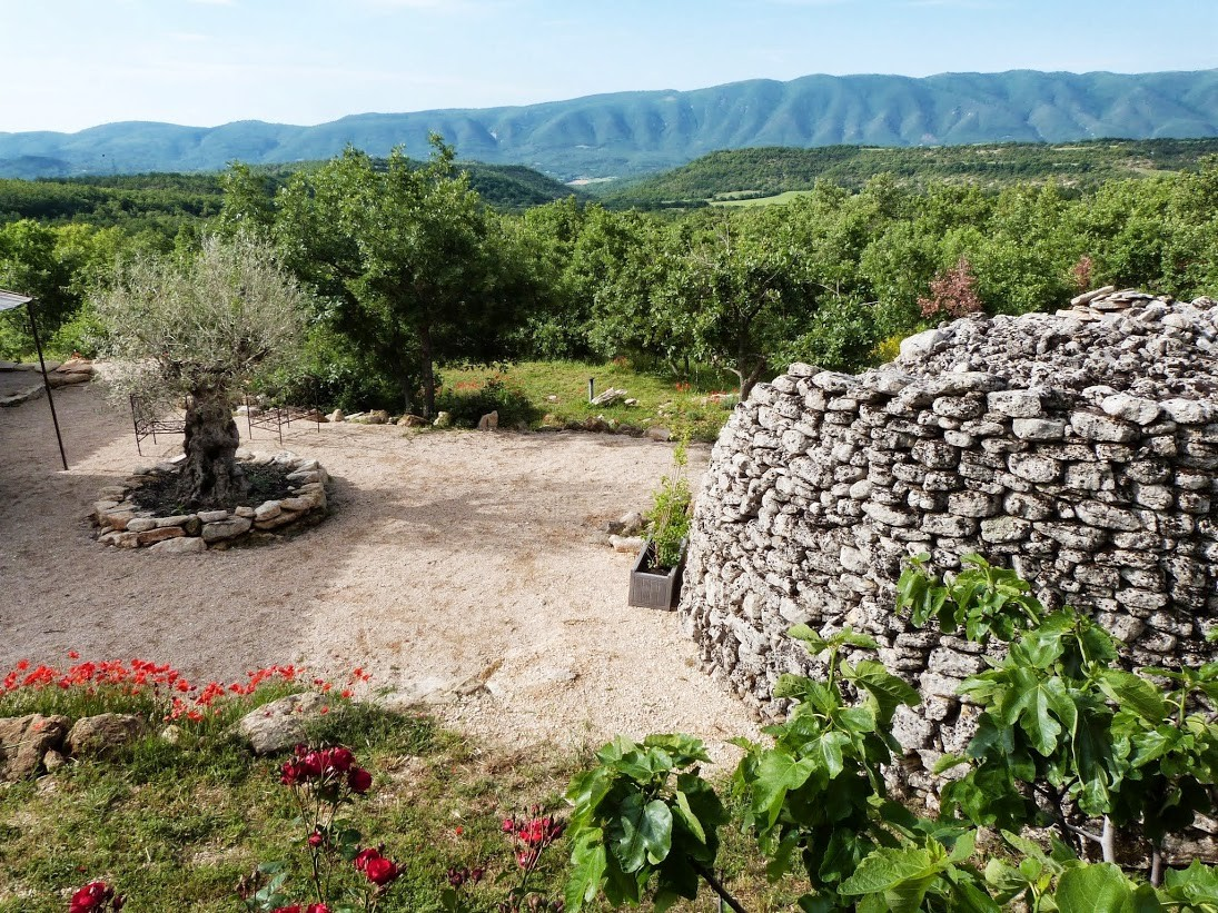 L'olivier du gîte et une borie typique du Luberon