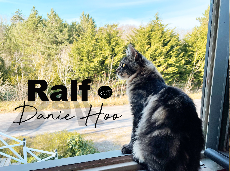 Ralf la Mascotte de Danie Hoo (Main coon du Comté de Knox)