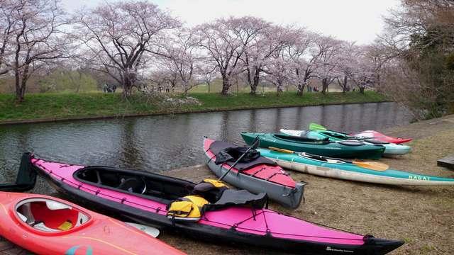 柏カヌークラブ。2016お花見ツアー。福岡堰
