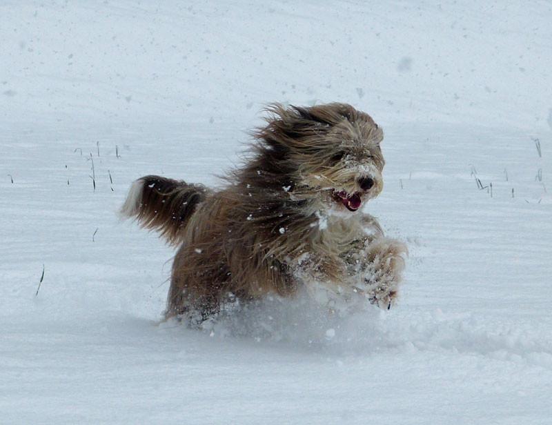auch Winterurlaub im Schnee macht den Hunden Spaß!