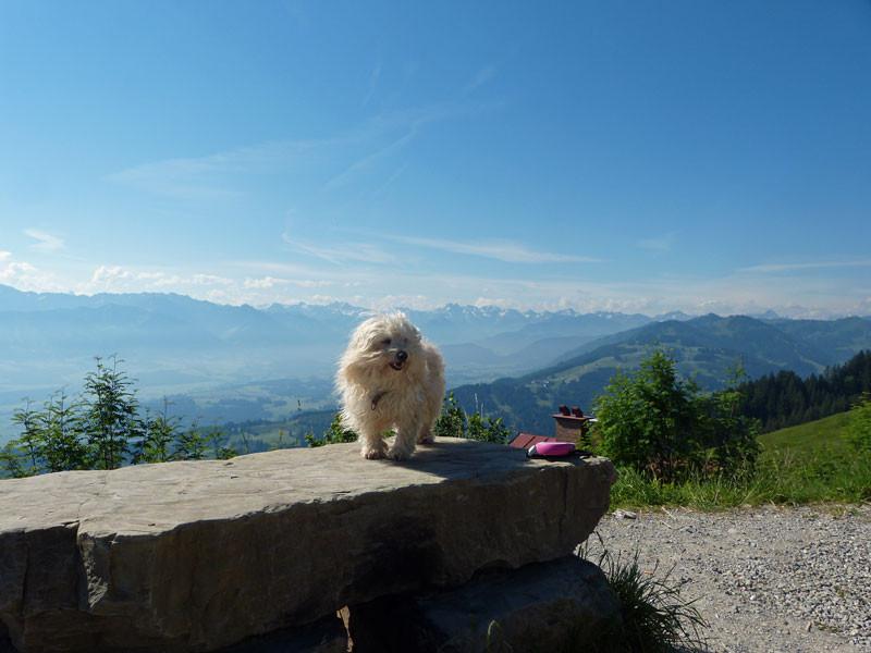 Bergtouren sind hier auch mit Hund problemlos zu bewältigen