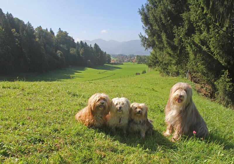vier Hunde mit Blick auf Rottach und die Berge