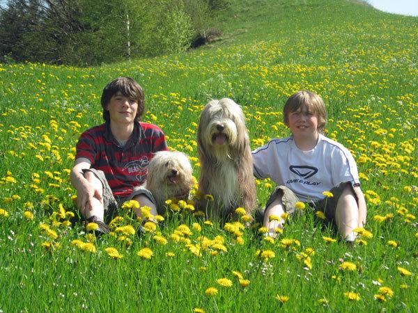 zwei Kinder und zwei Hunde im Löwenzahn