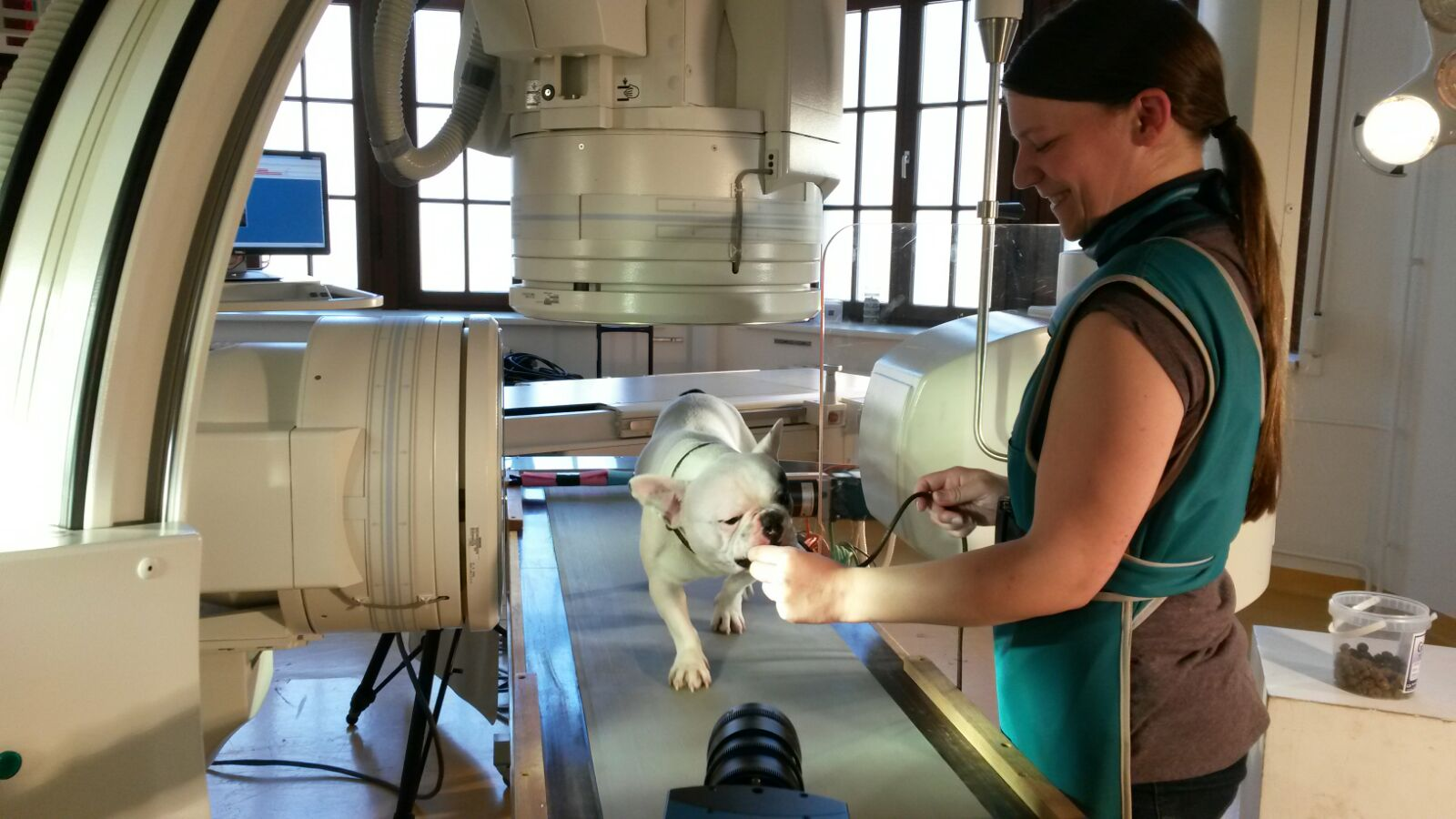 Micky auf dem Röntgen-Laufband