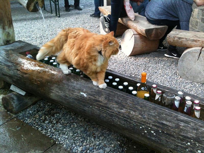 Special Guest: Garfield - Eigentlich liebt er Lasagne....