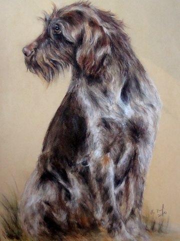 Deutsch Drahthaar, Hundezeichnung Pastellkreide