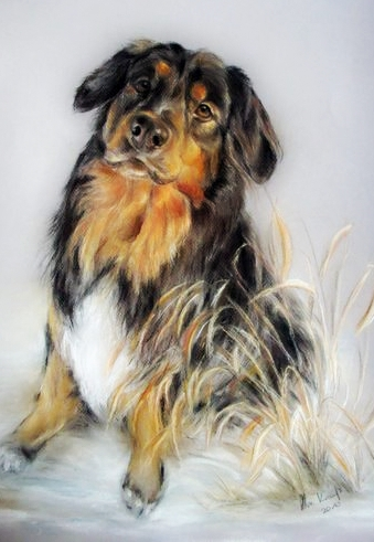 Hundeportrait Mischling