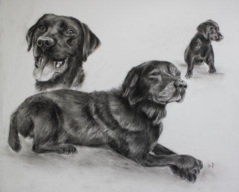 Hundeleben als Collage gezeichnet.