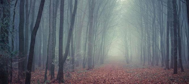 Herbstwald im Nebel auf dem Boden liegt Laub