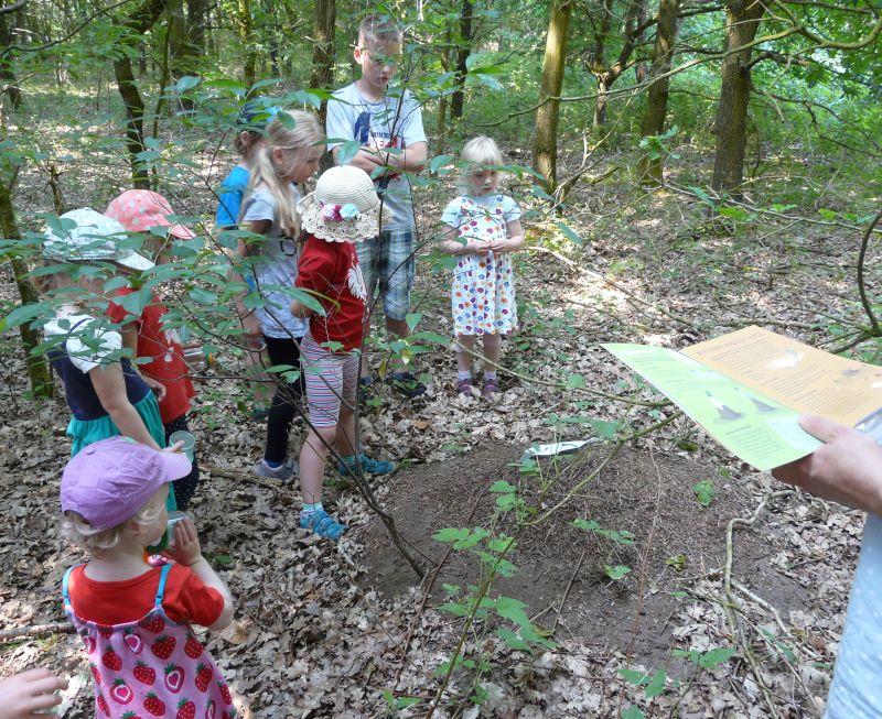 Am Bau der Roten Waldameise.