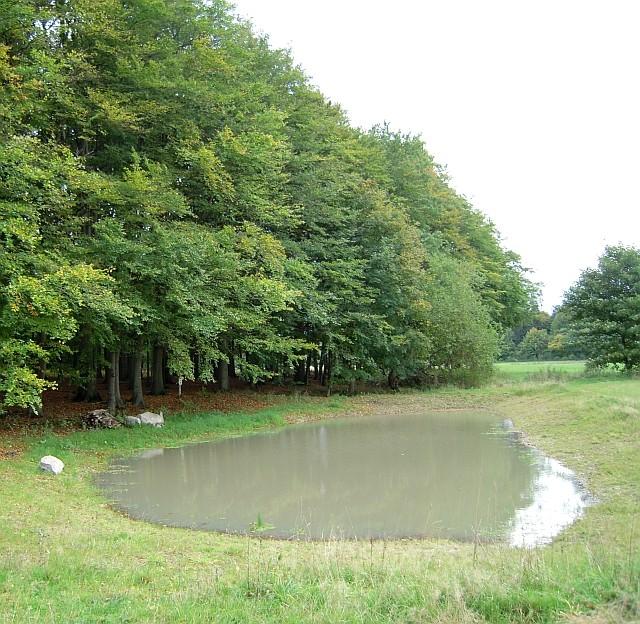 NABU-Kleingewässer am Rand des Fledermauswaldes.