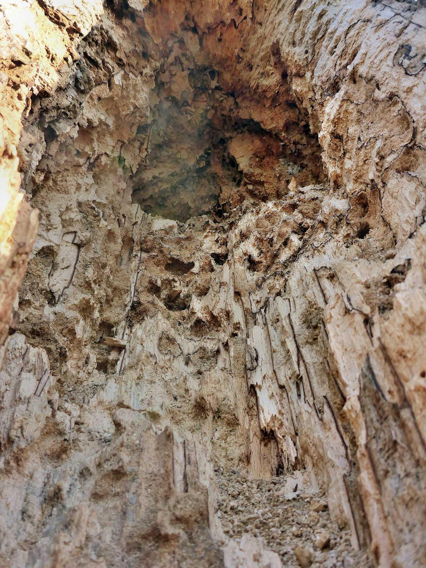 """Deutlich zu sehen sind mit """"Bohrmehl"""" gefüllte Frassgänge von Käferlarven im morschen Holz."""
