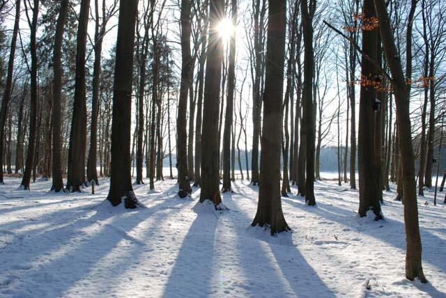 Winterstimmung im Fledermauswald.