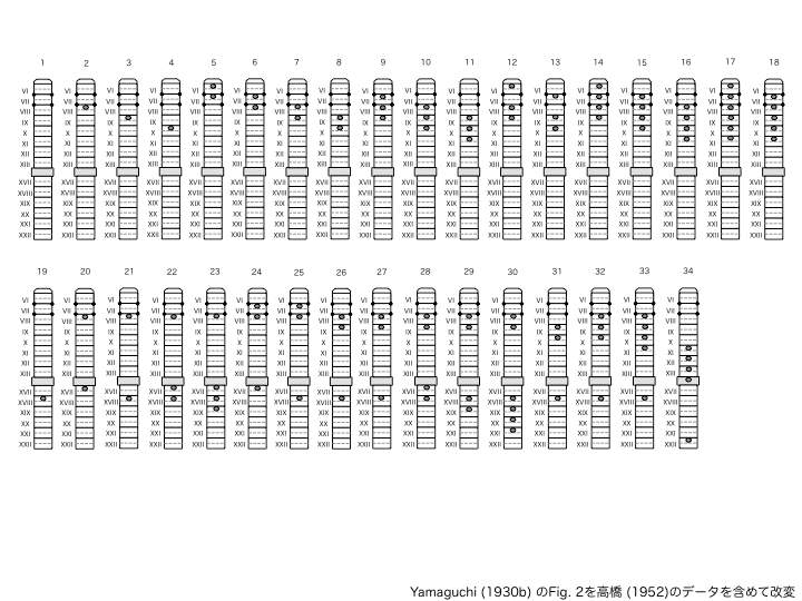 ヒトツモンミミズの紋の分布