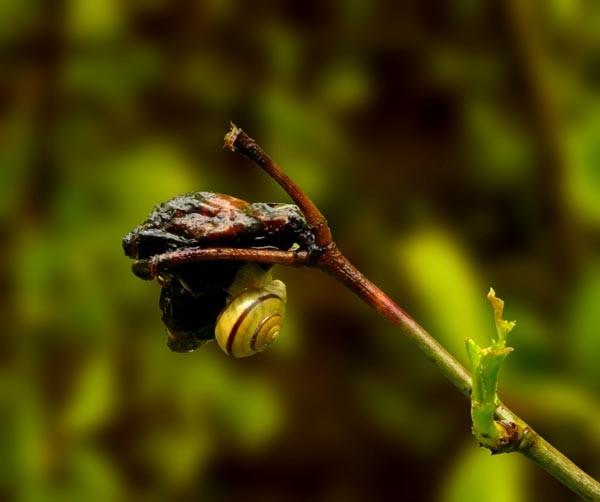 Schnecke, eigentlich kein Insekt