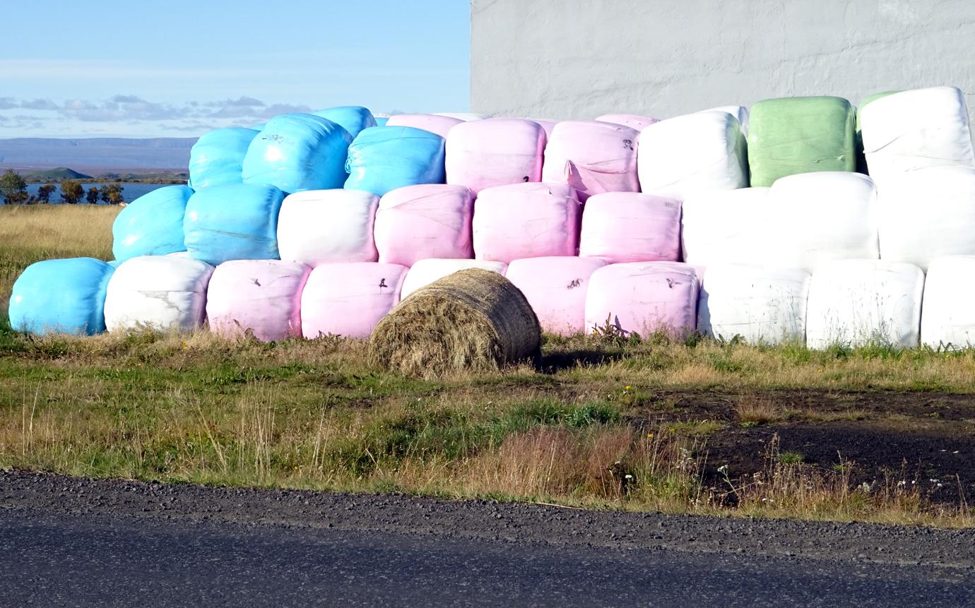Partout dans l'île en bord de route, des balles rondes de foin multicolores