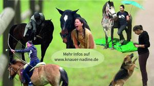 Unterrichts und Kursangebote von Dine-Show&Filmtiere - Pferdeausbildung