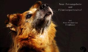 Neue Fotoangebote und Filmangebote für Tierfotografie