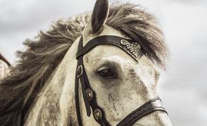 Pferd mit Kniebruch, Nepomuk erleidet schwere Trittverletzung, doch Besitzerin und er geben nicht auf!