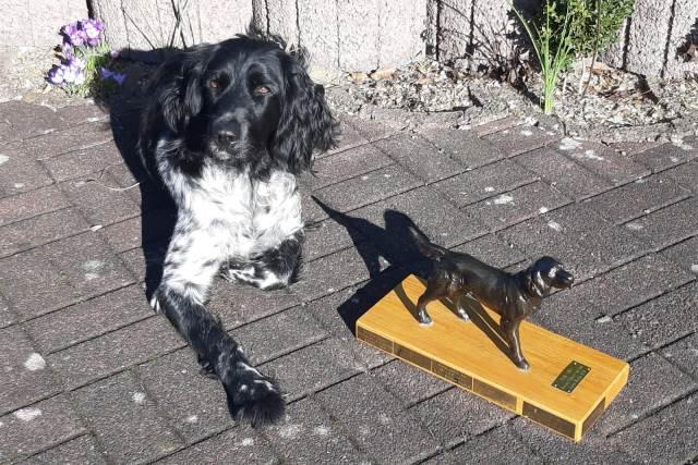 Bester Hund der VGM-Landesgruppe Ostwestfalen-Lippe auf der vorm-Walde-Auslese-HZP 2018: vW Adina von der Cloppenburg 132/17
