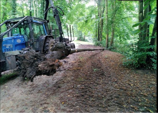 Arbre tombé dans le parc G. Sand de Mouy