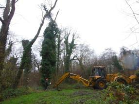 Abattages d'arbres dépérissants