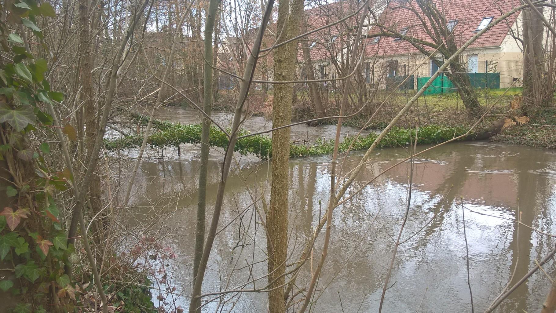 arbre en travers du cours d'eau -Mello