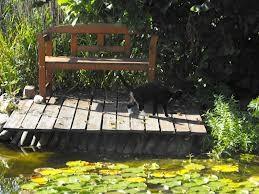 ruhiges Plätzchen am Teich
