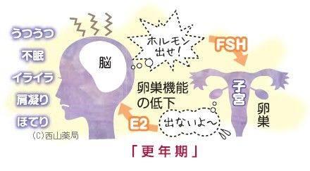 更年期のホルモン分泌のイメージ図(by新潟市の漢方薬専門店「西山薬局」)