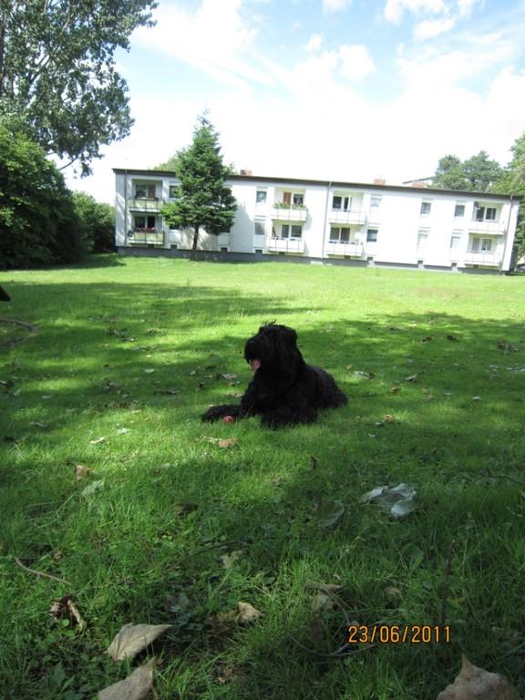 Gordian auf der Wiese, vor dem Haus in Dortmund
