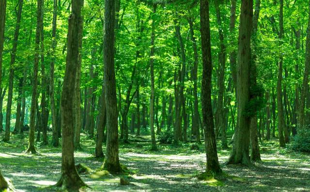 木、木の幹
