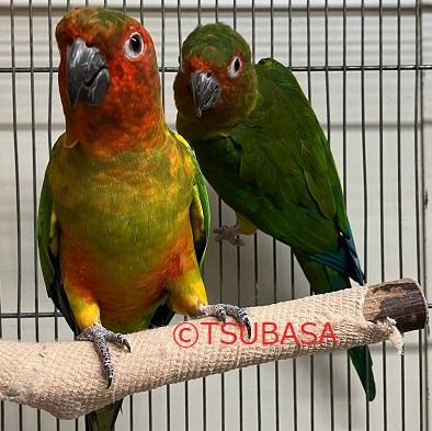 サルサ&アミーゴ