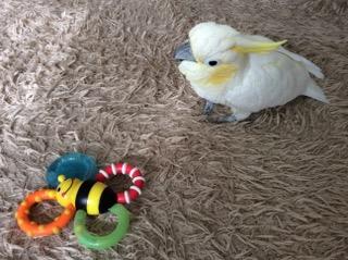初めてのおもちゃに緊張気味。