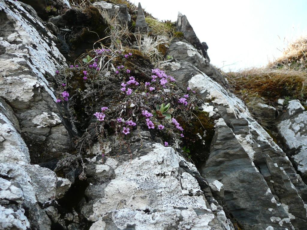 Der erste Blumenschmuck im Fels