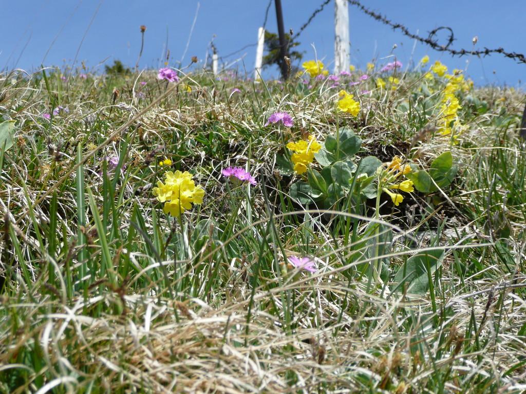 Blumenwiese am Alpkopf