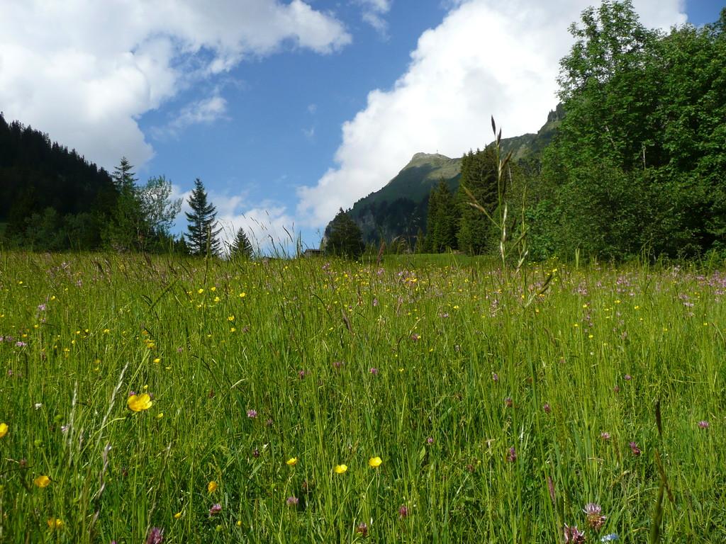 Bergwiese mit Blick zum Didamskopf