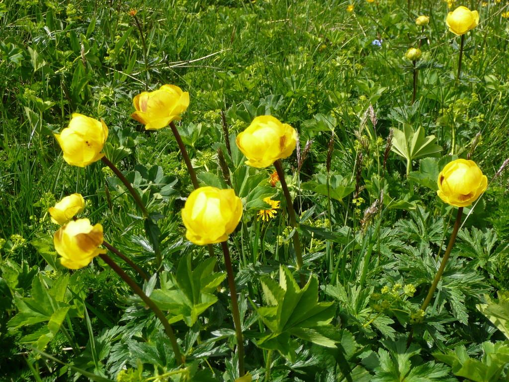 Blumenpracht am Glatthorn
