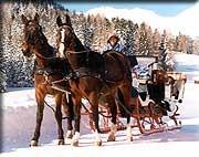 zuerst eine heimelige Pferdekutschenfahrt....
