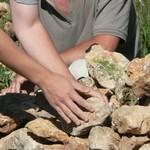 les murets en pierre séche