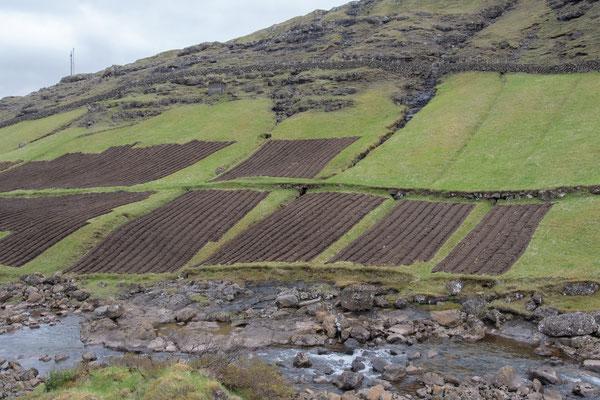 Kartoffelfelder.