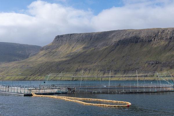 Aquakultur in Sørvágur