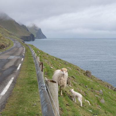 Schafe säumen den Weg und...