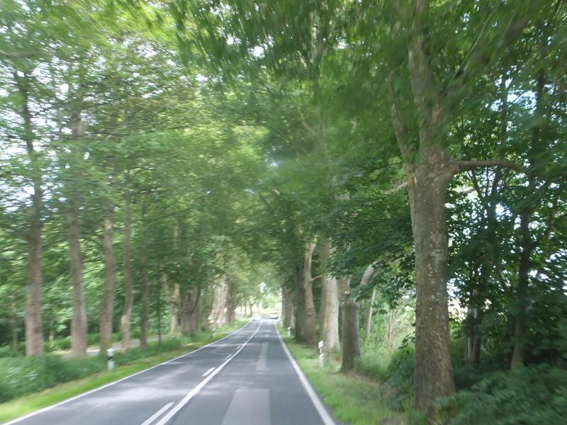 Alleenstraße auf Rügen
