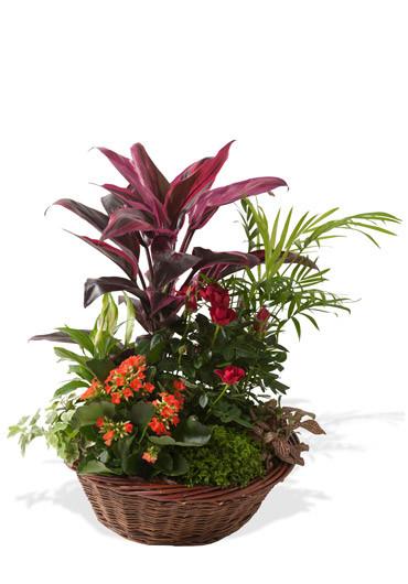 Minuit des fleurs des fleurs etc francheville for Vente de fleurs en ligne