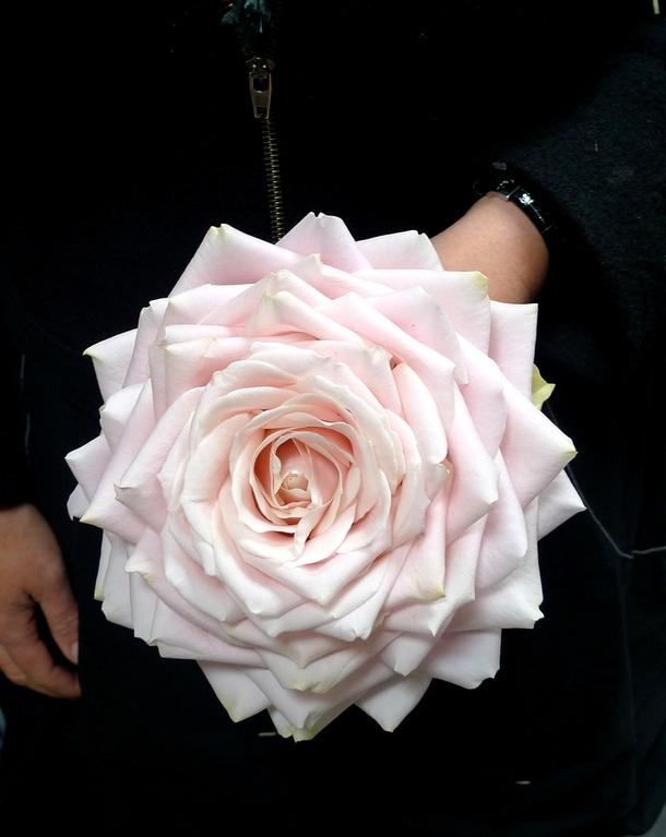 Bouquet de mariée (Rose reconstituée)
