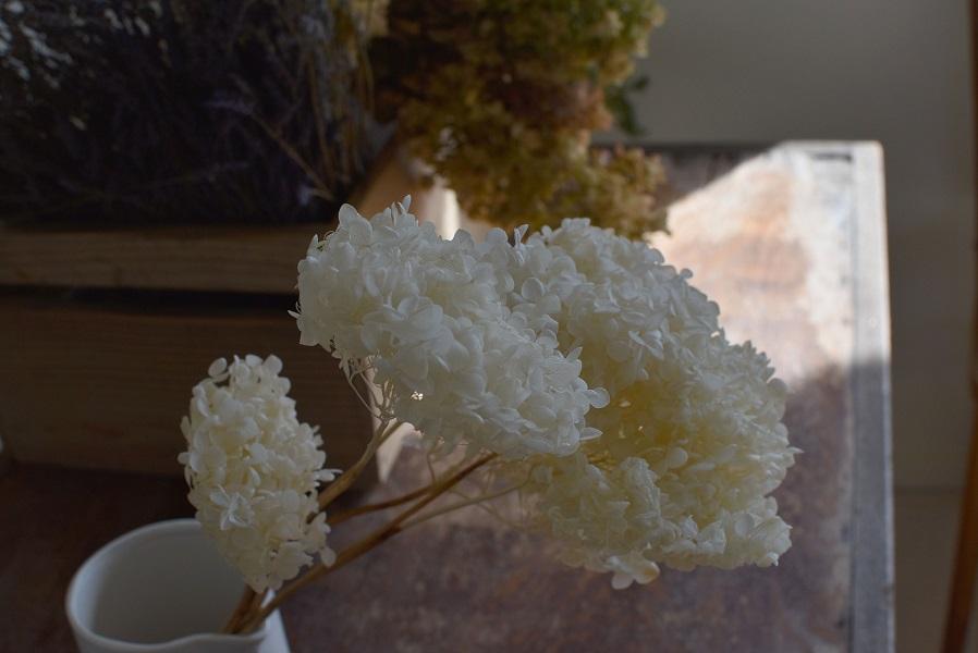 ドライ紫陽花。白さが綺麗。