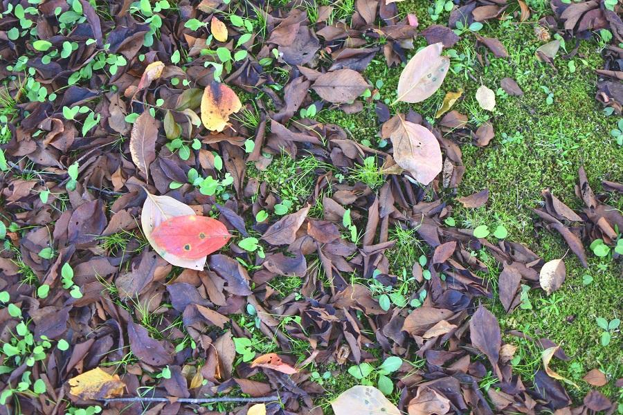 落ち葉がかさかさ 散歩が楽しい季節