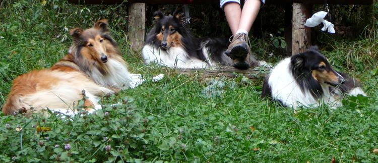 Die Hundis lernen schnell, dass man als Hund auch die Pausen nutzen sollte!