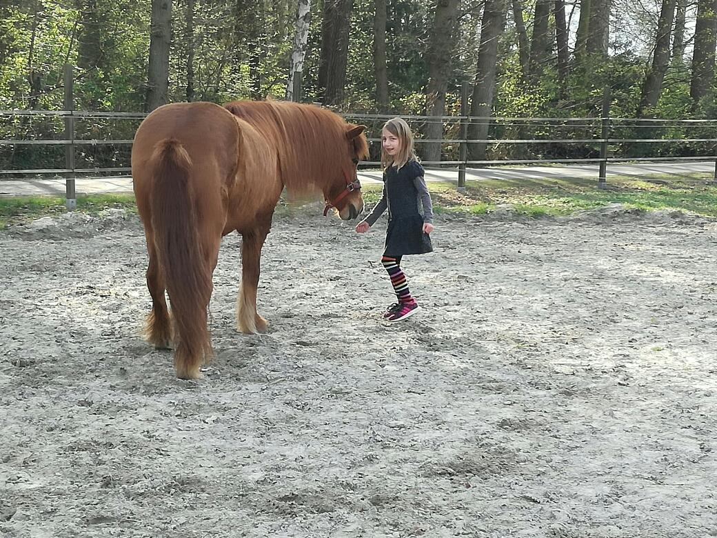 Pferdedame Lotta ist wegen ihrer langen Mähne besonders bei vielen Mädchen beliebt.