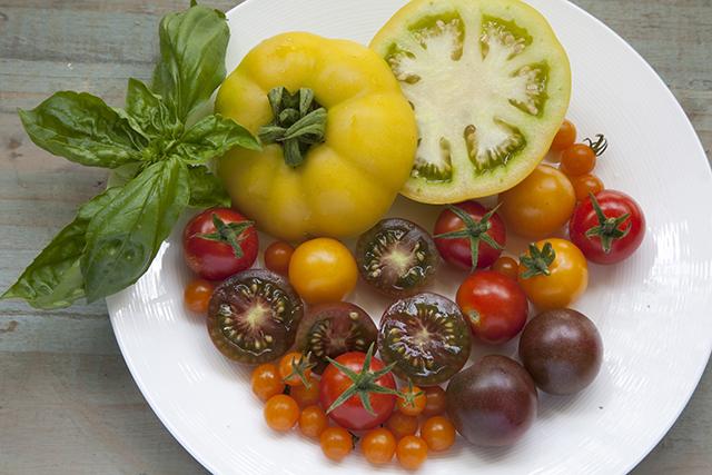 白い平皿に並べられた色とりどりのトマトと飾りのバジル